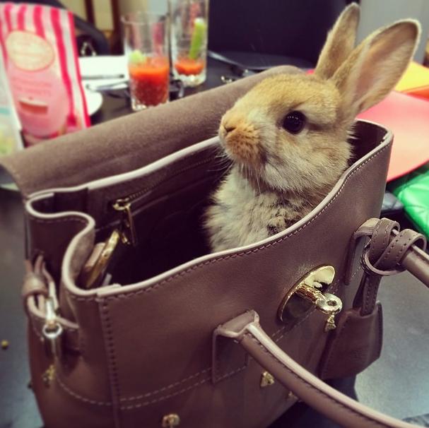 кролик Кары Делевинь фото