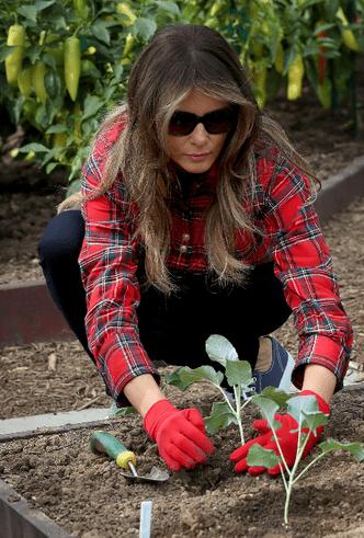Мелания Трамп разбила огород на территории Белого дома фото [6]