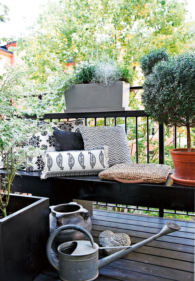 Растения на балконе: правила выживания (фото 11)