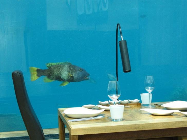 Полное погружение: топ-10 лучших подводных ресторанов (фото 11)