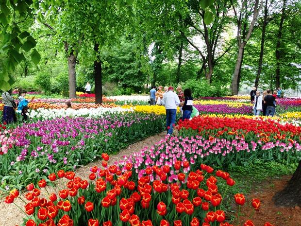 Ежегодный Весенний фестиваль цветов в «Аптекарском огороде» (фото 4)