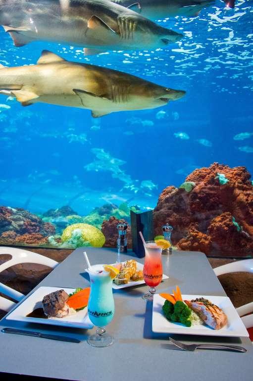 Полное погружение: топ-10 лучших подводных ресторанов (фото 27)