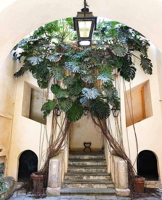 Самые модные комнатные растения этой осени (фото 5)