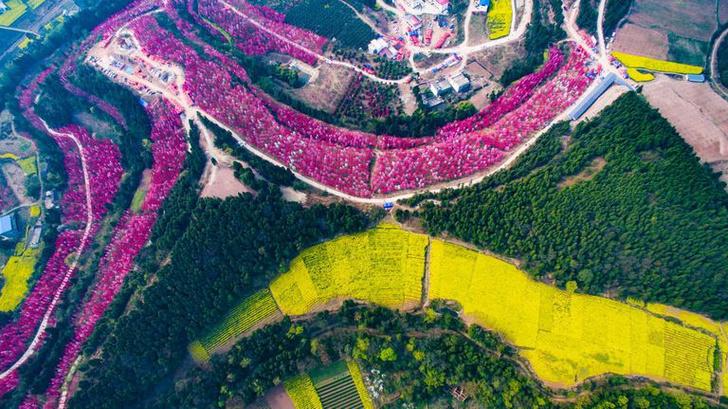 Цветение вишни в Китае: уникальные кадры (фото 5)