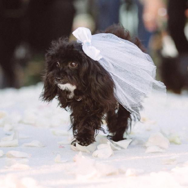 Эми Шумер вышла замуж (фото 12)