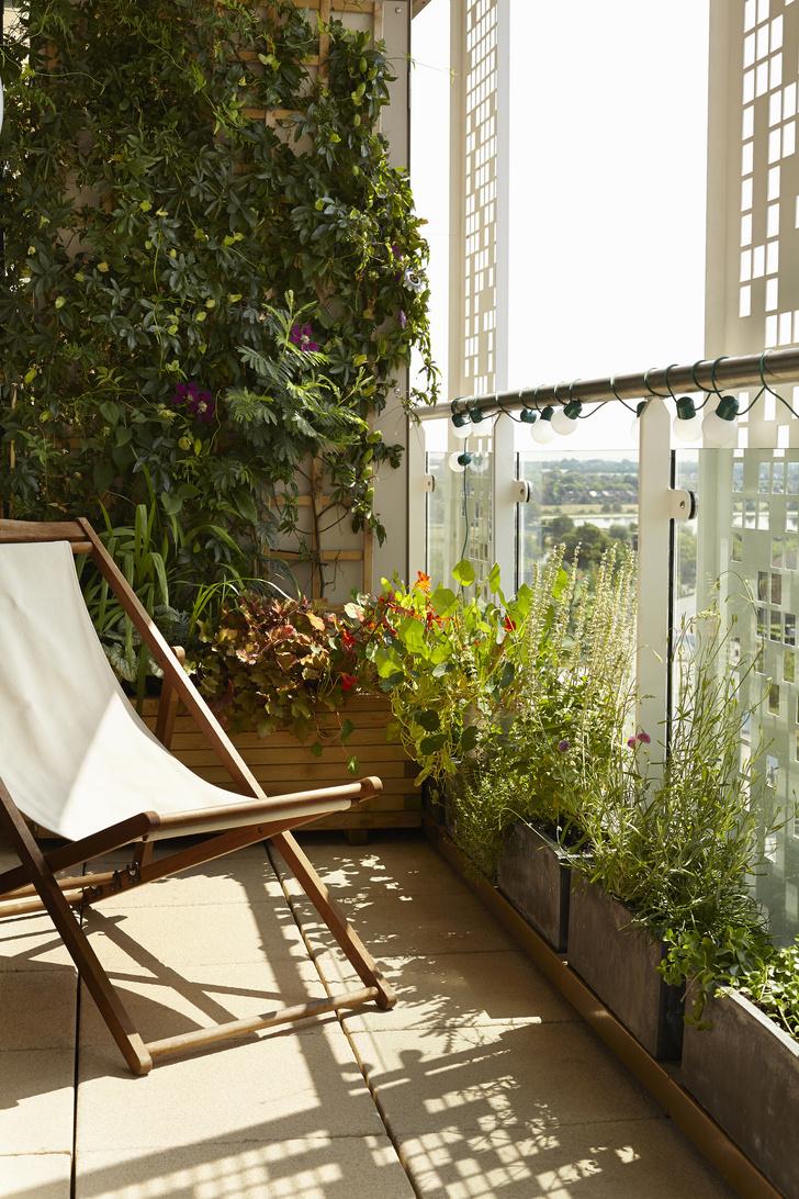 Что сажать на балконе: советы профессионала (фото 16)