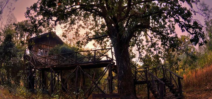 Экотренд: отели на деревьях (фото 11)