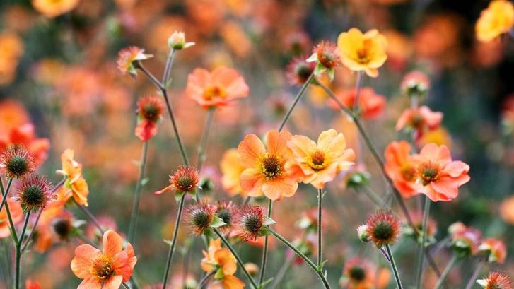 Модный сад круглый год: советы экспертов (фото 26)