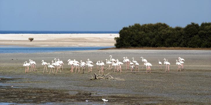 Фламинго — обитатели сказочных мангровых островов