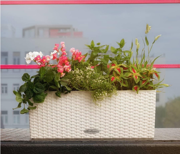 Готовые решения для озеленения балконов и террас (фото 5)
