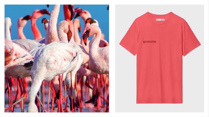 Необычная футболка оттенка соленого озера, которую носит Белла Хадид (фото 4)