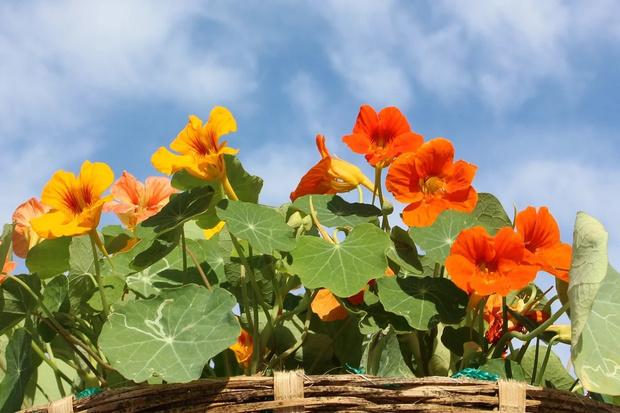 Чем заняться дома: сажаем цветы на балконе (фото 11)