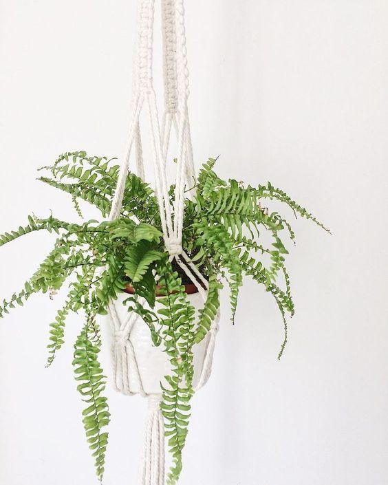 Висячие сады: 10 неприхотливых подвесных растений (фото 7)