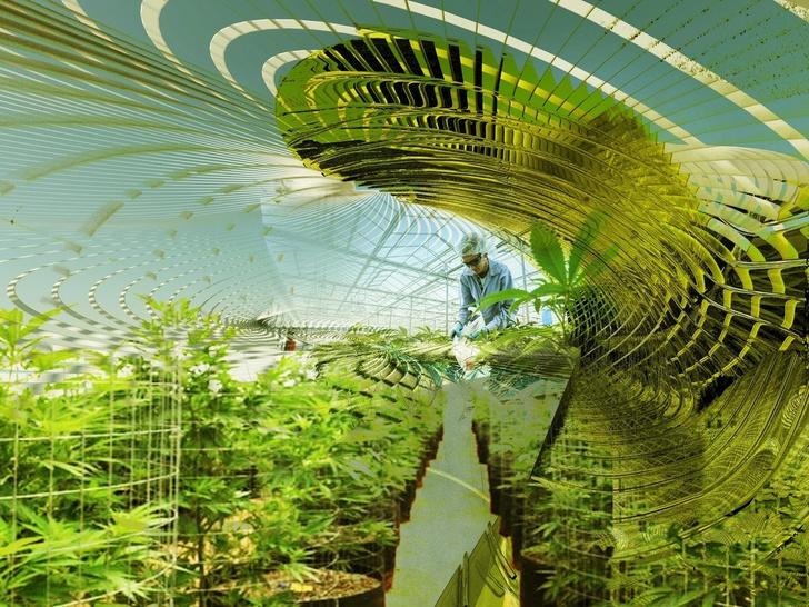 Ферма по выращиванию медицинской марихуаны в Каталонии (фото 3)